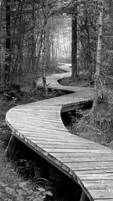 Boardwalk over the Bog