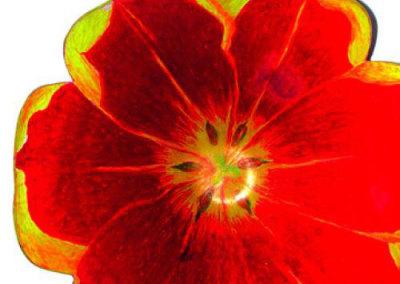 Tulip Bowl - Clarieza Caringal
