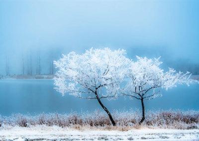 Cyan Morning Frost
