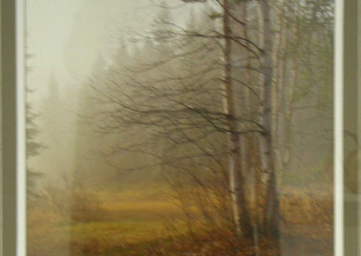 Patricia Wiebe, Birch In the Fog: Photography. 2012, $250.