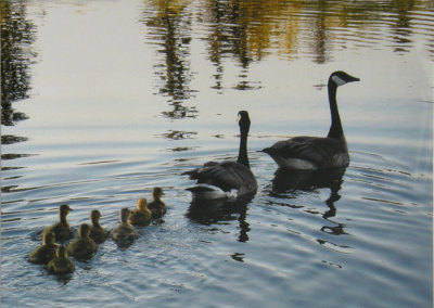 Debora Ann Verbonac, Family Swim: Photography. 2013, $325.