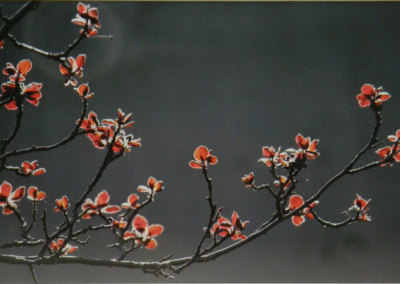 Ken Tickner, Tree of Mystery: Epson colour paper, peterboro archival mats; photography. 2013, $300.