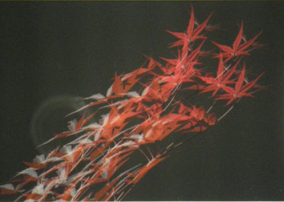 Ken Tickner, Flying Japanese Maple: Epson colour paper, peterboro archival mats; photography. 2013, $300.
