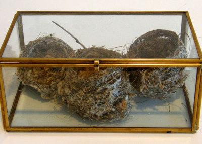 Still Life Nest Models: Bird nests in glass. NFS $50