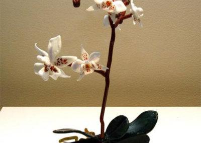 Orchids - Phalaenopsis amabilis - Iffat Ritter