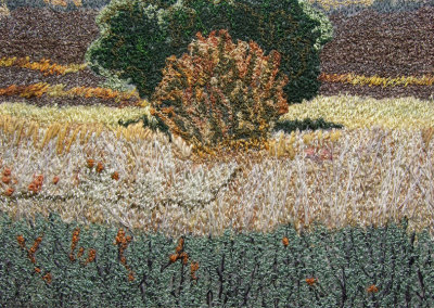 Cranberry Flats Autumn