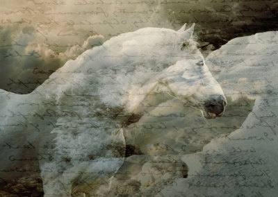 The Letter (Believe in White Horses)