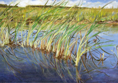 Bull Rushes (Karen Holden), 2013: Oil on canvas. $600
