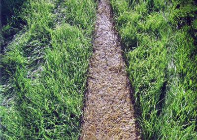 Hosaluk: Grass Wedge - 2013, Photo Mike Hosaluk. $175
