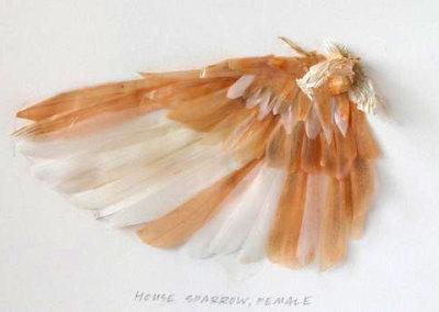 Wing Study - Bushtit - Tara Bursey