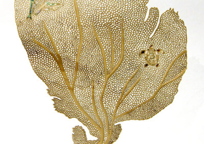 Debra McLeod, Island Dreams: Birch, sea shells; carving, turning, inlay, piercing. 2013, $2,800.