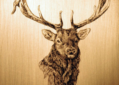 Hand engraved Elk