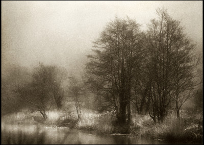 "Ian Preston ""Cornwall Trees"" 2014. Chromogenic print; Film negative, digital printing. $210."