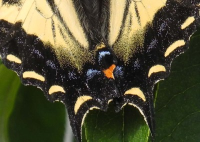 """Beverly Kernan """"Butterfly's Tail"""" 2011. Pigmented ink on Cold Press paper; Handheld point and shoot camera, unaltered print. $50"""