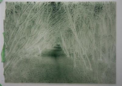 "John Penner ""A Walk in the Wood – negative"" 2015. Transparency film (used for contact printing on salted paper). Not For Sale."