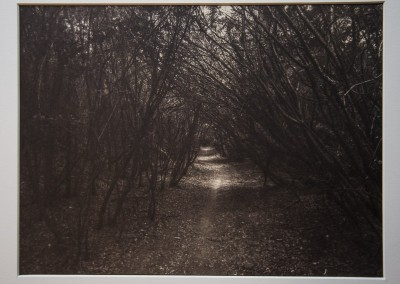 "John Penner ""A Walk in the Wood"" 2015. Salt print on Arches Platine rag paper; Gold toned and waxed. $350."
