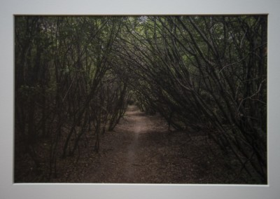 "John Penner ""A Walk in the Woods"" 2015. K3 pigment digital print; Waxed. $250."