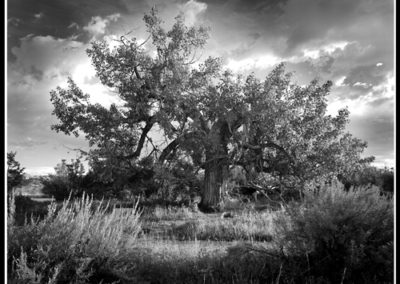 Spirit Tree (Robert S. Pohl), 1997: Analog photography.  $695.