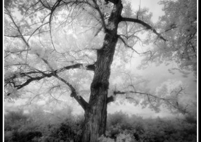 Riverside Glade (Robert S. Pohl), 2010: Analog photography.  $695.