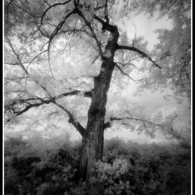 Riverside Glade (Robert S. Pohl), 2010: Analog photography.  $695.