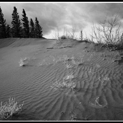 Jasper Dunes (Robert S. Pohl), 2003: Analog photography.  $695.