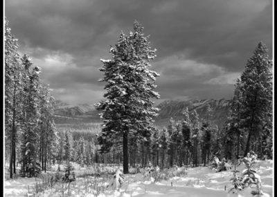 Pristine Light, Patricia Lake (Robert S. Michiel), 2012: Analog photography.  $695.