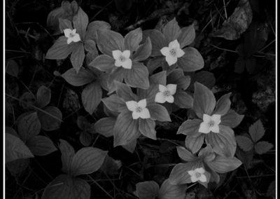Group of Seven (Robert S. Pohl), 2012: Analog photography.  $695.