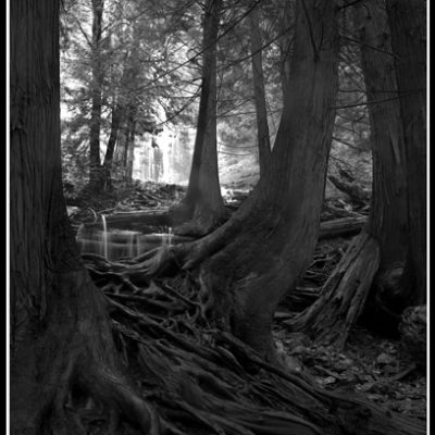 Ancient Roots (Robert S. Michiel), 2012: Analog photography. $695.