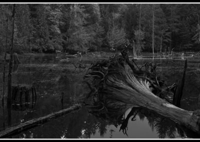 Sproat Pond Solitude (Robert S. Michiel), 2012: Analog photography. Not for sale.