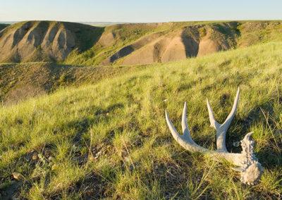 Mule Deer Paradise