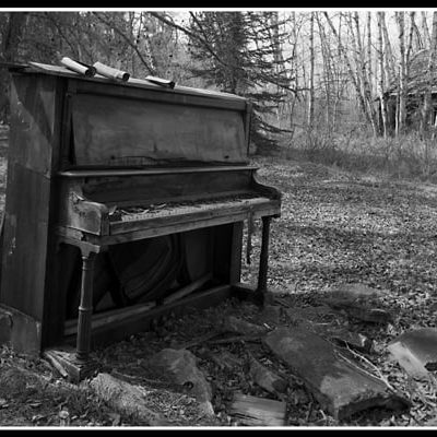Forest Melody (Robert S. Pohl), 2014: Analog photography.  $695.