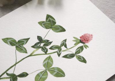 Red Clover by Jenni Haikonen