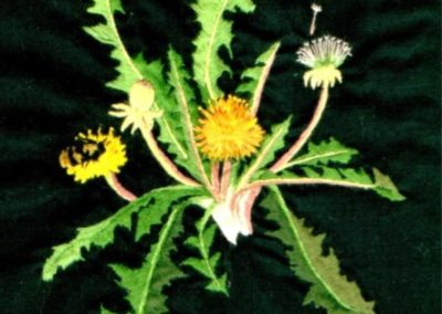 2007 - Dandelion (silk & cotton)