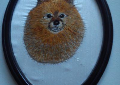 Farley, the Pomeranian 2014