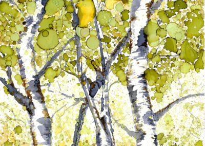 Sk Series - Birches